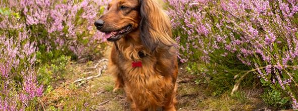 Vijf voordelen van buiten trainen met je hond