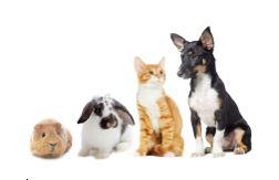 CBD-olie voor huisdieren van klein tot groot
